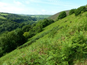 Heddon. Ladies Mile slope 18.6.15 - Copy